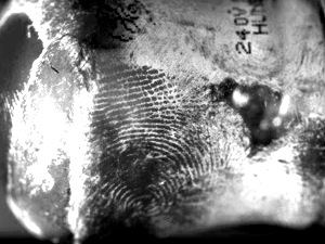fingerprints detected on light bulb